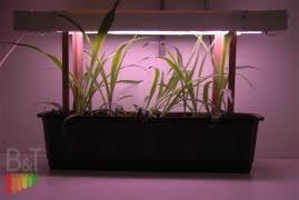 Выше и тоньше или сильнее и крепче? <b>Подсветка растений</b>.