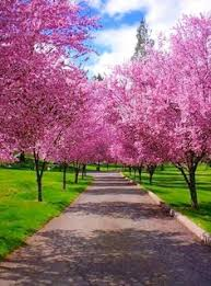 Image result for driveways plants and flowers