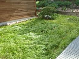 Image result for pennsylvania sedge grass