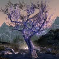 <b>Sleeping Tree</b> Camp | Elder Scrolls | Fandom