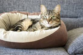 The 25 Best <b>Cat Beds</b> of 2019 - <b>Cat</b> Life Today
