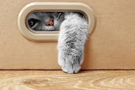 Серые <b>кошки</b>: дымчатая удача — Кот Обормот
