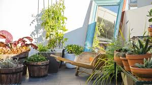 Small Picture Rooftop garden ideas