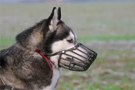 Ввели новые правила: <b>Собаки</b> - в намордниках, зоопарки - без ...