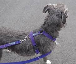 The Mekuti <b>Balance</b> Dog Harness: stop your dog pulling on the lead.