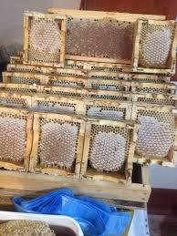 Фотография | Пчела, Пчеловодство, Мед
