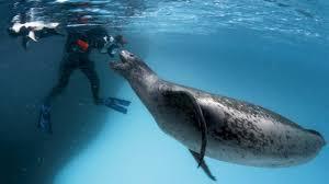 man killing seals