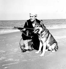Σκύλοι και στις ακτές...