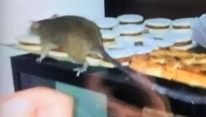 Resultado de imagen para ratas palermo