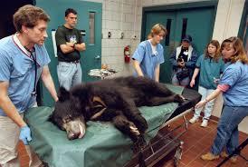 toledo zoo veterinarian blames firing on his warnings to usda toledo zoo veterinarian blames firing on his warnings to usda the blade
