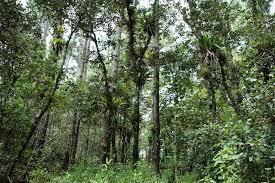 Sierra Álamos – Río Cuchujaqui (Area protegida) Images?q=tbn:ANd9GcRJftj4NVYlG3dHdcnflR4r24rRoTi0dQE7OBmyQjSi0WGubcRg