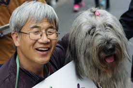 the smiles grins amp happy faces of south korea  photo essay a smiling and warm hearted korean man with his dog on the pedestrian street of insadong