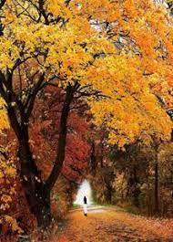 Kết quả hình ảnh cho mùa thu buồn mênh mang