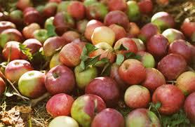 """Résultat de recherche d'images pour """"pommes"""""""
