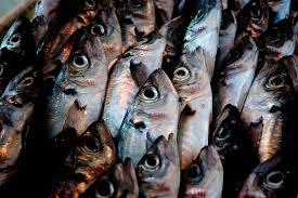 Profile: The <b>Black Fish</b> - Lush Fresh Handmade Cosmetics UK