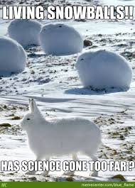 They Are Called Arctic Hares by recyclebin - Meme Center via Relatably.com