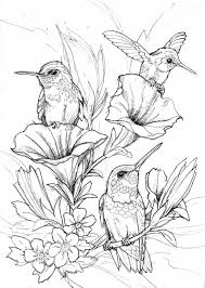 Small Picture Best 25 Hummingbird colors ideas on Pinterest Hummingbird