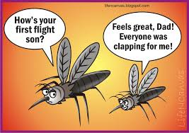 Image result for mosquito picture