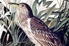 qua-bird