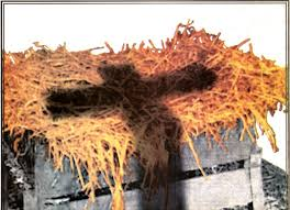Image result for images of the manger, cross and crown