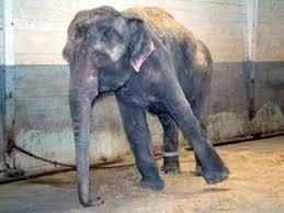 """""""馬戲團的大象""""的图片搜索结果"""