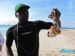 Gibbs Cay Conch