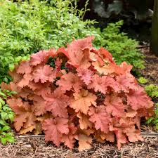 Extremely Attractive Foliage | Perennial Resource