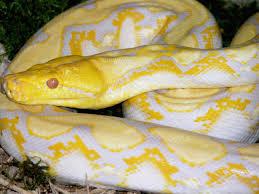 """Résultat de recherche d'images pour """"image serpent"""""""