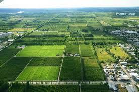 Resultado de imagen para ruta del vino neuquen
