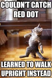 HATERS GONNA HATE - Pimp Strut Cat - quickmeme via Relatably.com