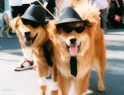 Pet Halloween Costumes