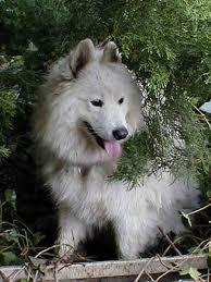 Nicky meine Hündin - Bild \u0026amp; Foto von Monika Micke aus Hunde ... - Nicky-meine-Huendin-a30498983