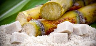 Image result for pics of sugarcane