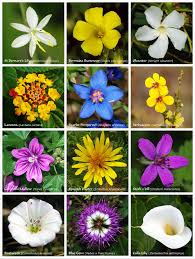 <b>Flower</b> - Wikipedia