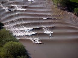Surfing di ombak bono sungai kampar