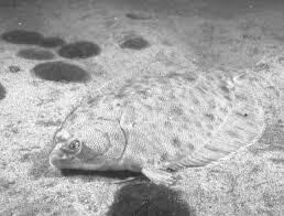 Endocrine Disruption in <b>Fish</b> (NCCOS Technical Memorandum 149)