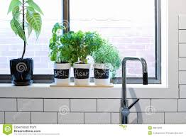 Kitchen Windowsill Herb Garden Pots Of Herbs On Contemporary Kitchen Window Sill Stock Photo