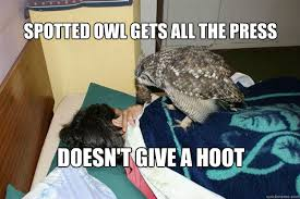 spotted owl gets all the press doesn't give a hoot - Good Guy Owl ... via Relatably.com