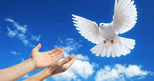 Resultado de imagem para paz fotos