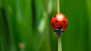 <b>Ladybug</b> | San Diego Zoo Animals & Plants