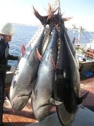 Resultado de imagen de atun, cazon y pez espada imagen
