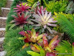 Small Picture 72 best Tropical Garden images on Pinterest Landscaping Gardens