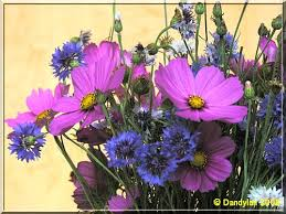 """Résultat de recherche d'images pour """"bouquet champêtre"""""""