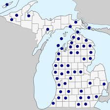 Epipactis helleborine - Michigan Flora