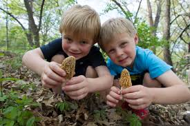 mushroom hunting mdc discover nature two boys morels