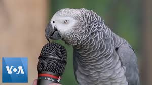 Talking <b>Parrot</b> - YouTube