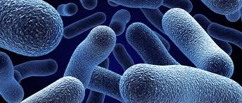 Image result for ANTIMICROBIALS