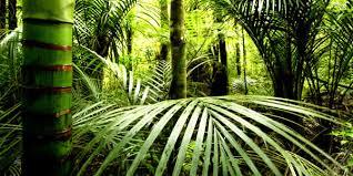 our plants brisbane office plants