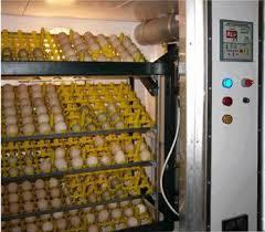 <b>Инкубатор</b> (яйцо) - <b>Incubator</b> (<b>egg</b>) - qwe.wiki