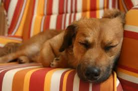 Όποιος κοιμάται με σκύλους...